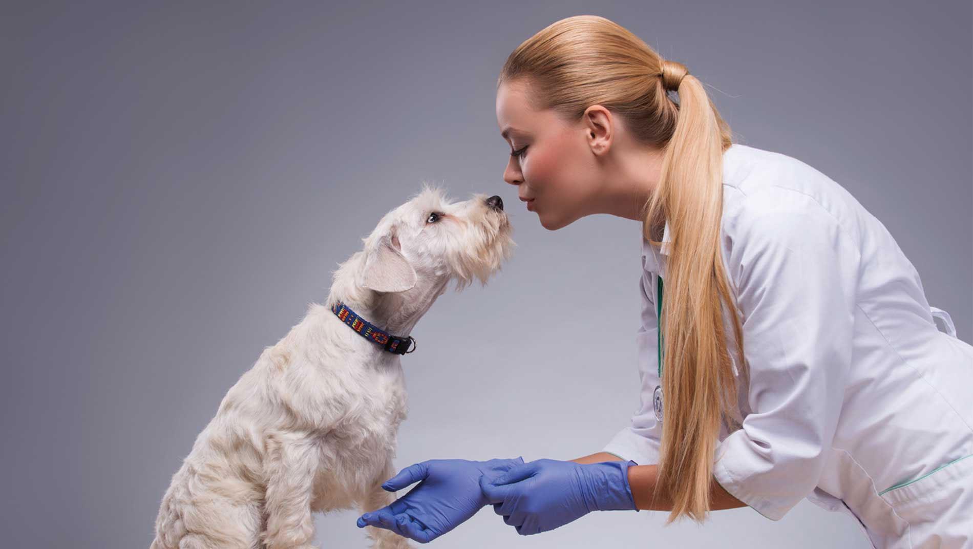 alcyon-centrale-achats-veterinaire-communication-web-agence-karma-communication-nice-paris-carte-visite-1